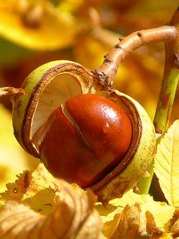 Chestnut, Chestnut Fruit, Fruit, Tree, Sleeve, Brown