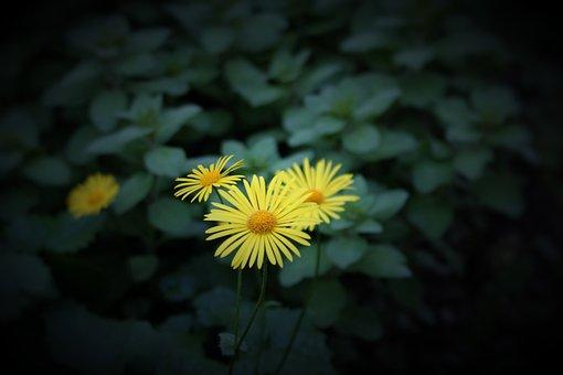Flower, Perennial, Plant, Garden, Nature
