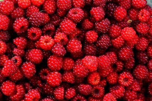 Raspberry, Red, Berry, Fruit, Wild, Gather, Plant
