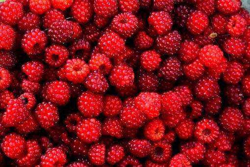 Raspberry, Red, Berry, Fruit, Wild, Gather, Plant