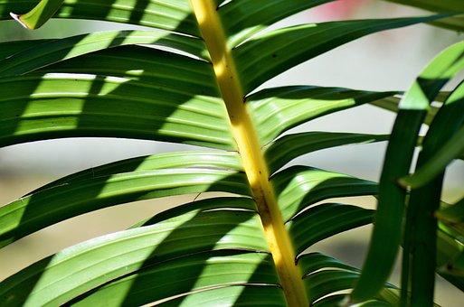Banana, Yellow, Plants, Tree, Green, Nature, Leaves