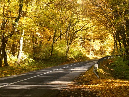 Road, Forest, Nature, Forest Road, Trees, Autumn, Wood