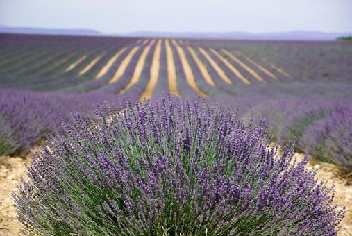 Provence, Valensol, Lavender, Perfume