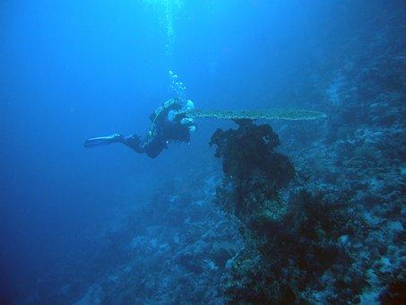 Diving, Underwater, Water, Underwater World, Sea