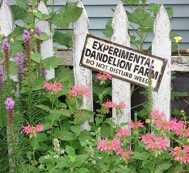 Garden, Sign, Fence, Monarda, Liatris, Bee, Balm