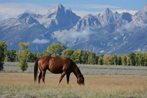 Horse, Meadow, Mountains, Wyoming, Ranch