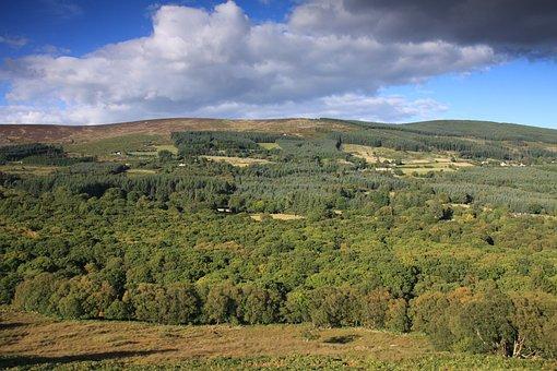 Glencree, Woodland, Wicklow, Ireland, Nature Ireland
