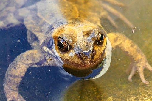 Animals, Frogs, Amphibian, Nature, Macro, Green, Wild