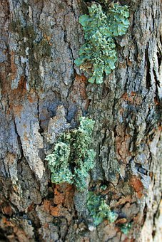 Tree, Trunk, Lichen, Curly, Green, Symbiosis