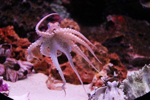 Octopus, Kraken, Ocean, Sea Life, Animal, Aquarium