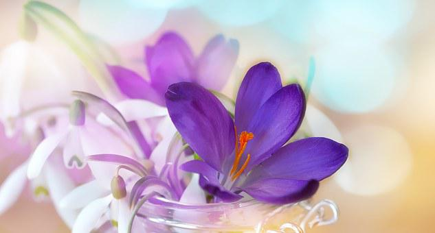 Crocus, Snowdrop, Lily Of The Valley, White, Purple
