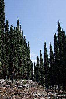 Cypress, Mediterranean Cypress, Cupressus Sempervirens