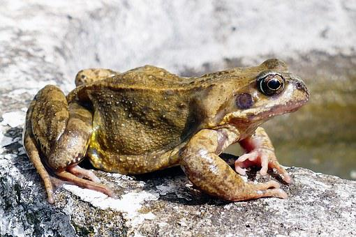 Animals, Frogs, Amphibian, Nature, Macro, Green, Wild
