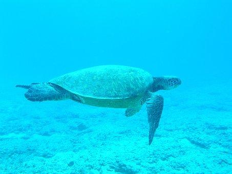 Turtle, Ocean, Blue, Sea, Underwater, Swimming, Diving