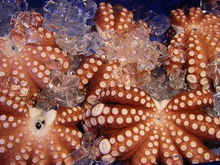 Octopus, Frozen, Food, Seafood, Raw, Squid, Tentacle