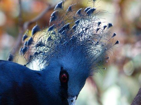 Fan-deaf, Bird, Spring Jewelry, Plumage, Blue