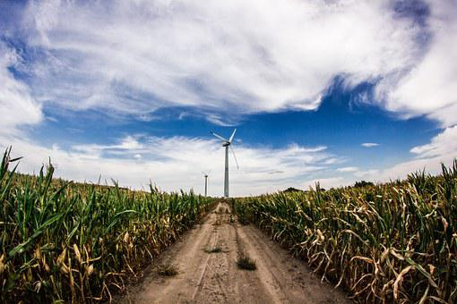Crops, Windmill, Corn, Agriculture, Rural, Farm, Field