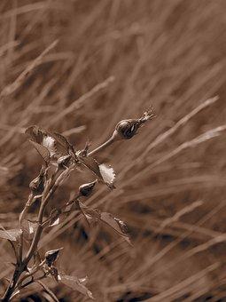 Plant, Bud, Spring, Nature, Flower, Garden, Closeup