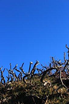 Deadwood, Dwarf Tree, Blue Sky, Dry, Green, Sky, Hill