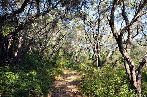 Nature, Olive Trees, Green, Olives, Oilseed, Trees