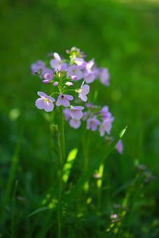 Smock, Flowers, Light Purple, Purple
