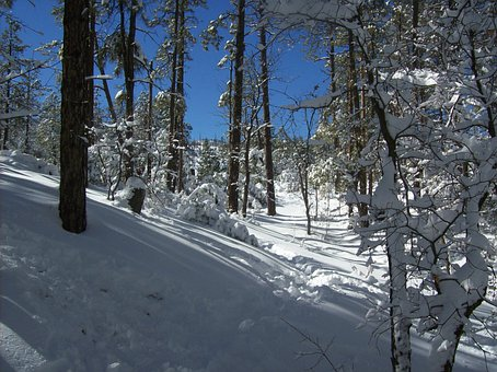 Forest, Winter, Snow, Trees, Lynx Lake, Prescott