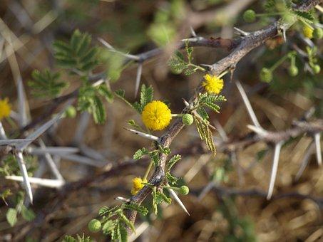 Thorns, Spur, Close Up, Thorn, Tiefenschärfe, Bush