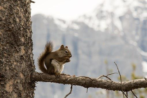 Squirrel, Mountains, Nature, Small, Animal, Mammal