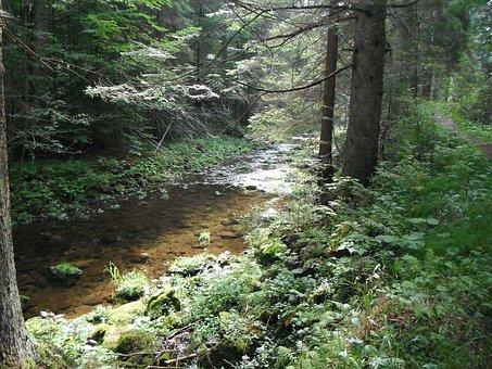 Brook, Rivulet, Stream, Natural, Watercourse
