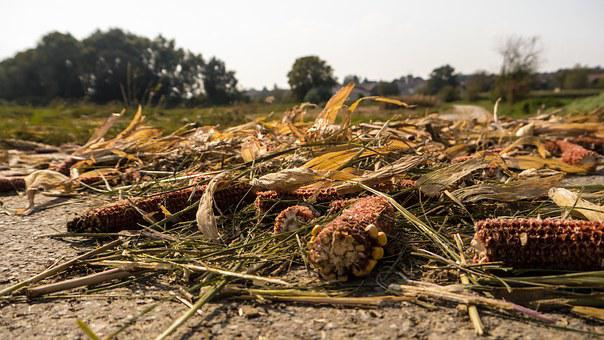 Harvest, Remains, Crop Residues, After The Harvest