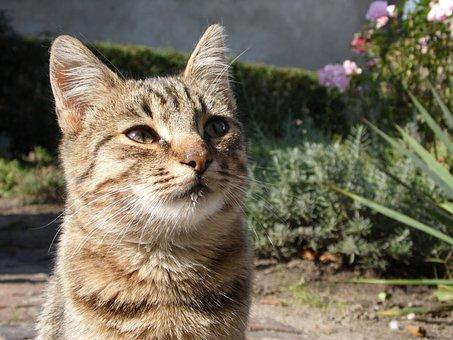 Cat, Kitten, Small, Animals, Animal, Pet, A Normal Cat