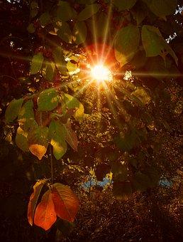 Autumn, October, Forest, Golden, Golden Autumn