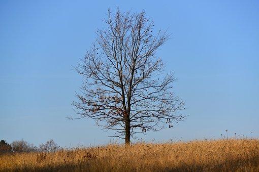 Autumn, Oak, Loneliness, Reverie, Tree, Nature, Sky
