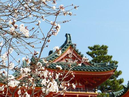 Sakura, Tree, Spring, Nature, Cherry, Bloom, Blossom
