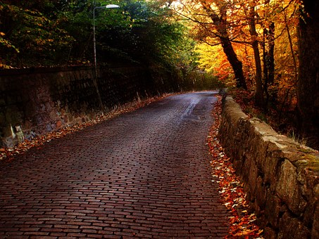 Road, Bricks, Trees, Path, Stone, Pavement, Walkway