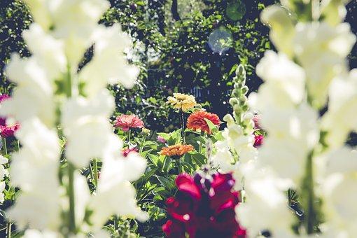 Garden, Flowers, Blossom, Bloom, Flora, Rose