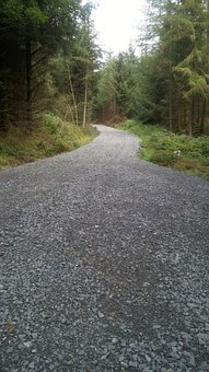 Hill, Forest, Path, Footpath, Scottish, Nature, Tree