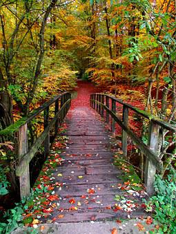 Away, Forest, Autumn, Emerge, Colorful, Yellow, Red