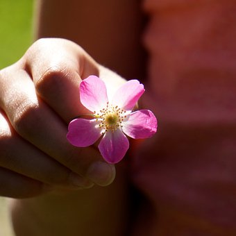 A Flower For You, Show, Reach Out, Give, Hand, Friend