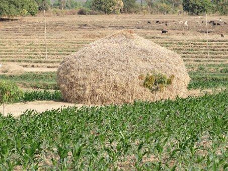 Haystack, Hay, Harvest, Crop, Residue, Straw, Field