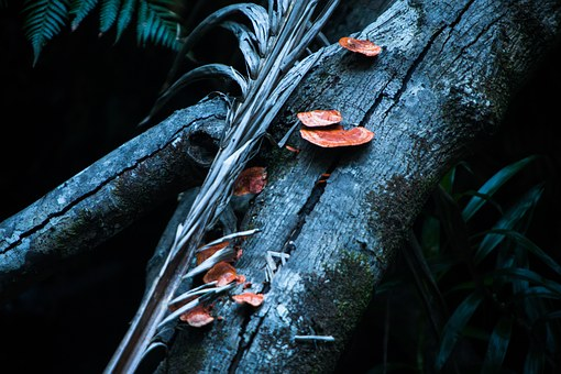 Mushroom, Orange, Baumschwamm, Wood, Jungle, Tree