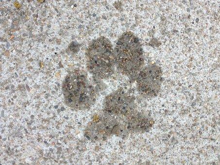 Dog, Paw, Paw Print, Pet, Puppy, Canine, Paws, Imprint