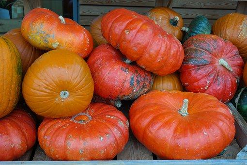 Pumpkins, Red Zentner, Rouge Vif D ' étampes, Squash
