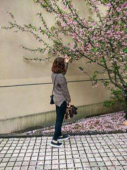Flowers, Afternoon, Campus, Spricg, Cherry Blossom