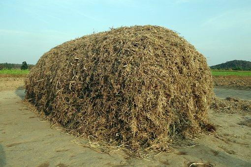 Horse Gram, Kulthi, Pulse, Crop Residue, Fodder, Stack