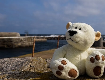 Teddy Bear, Bear, Bears, Travel, Sea, Baltic Sea