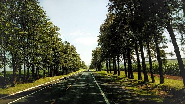 Trees, Path, Wood, Green, Landscape, Sky, Environment