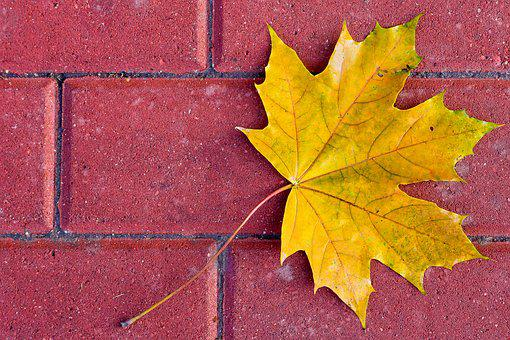 Leaf, Yellow, Autumn, Maple, Fall, Nature, Vibrant
