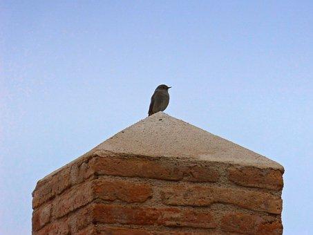 Bird, Pedestal, Lookout