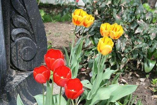 Flowers, Blooms, Bright, Tulips, Red, Yellow
